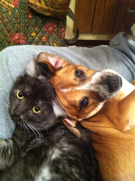 dogs  cats   love  cuddle