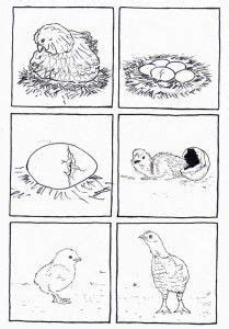 life cycle bird coloring page life cycles coloring