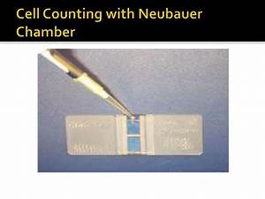 Cell Counting