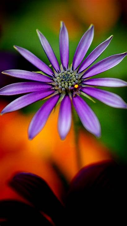 Purple 1080p Wallpapers Flower Mobile Backgrounds Android