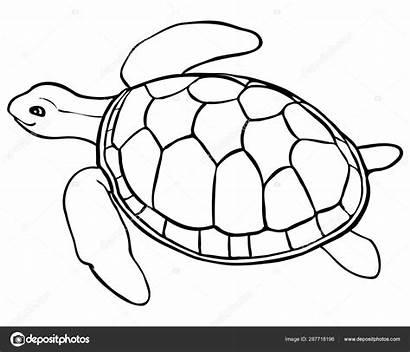 Turtle Coloring Sea Pages Line Contour Printable