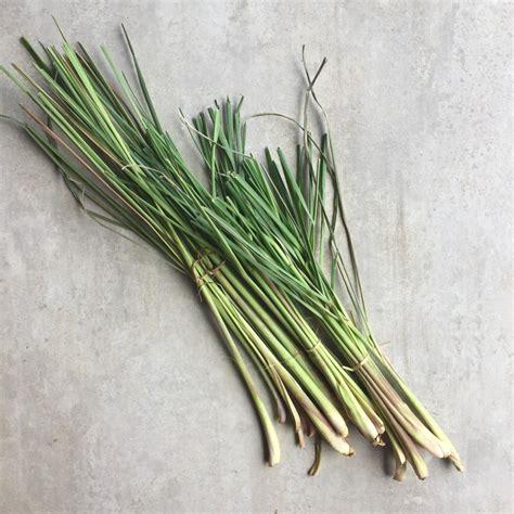 how to use lemongrass how to use lemongrass in diy skincare little green dot