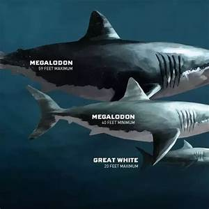 How Big Was A Megalodon Compared To Sharks Today