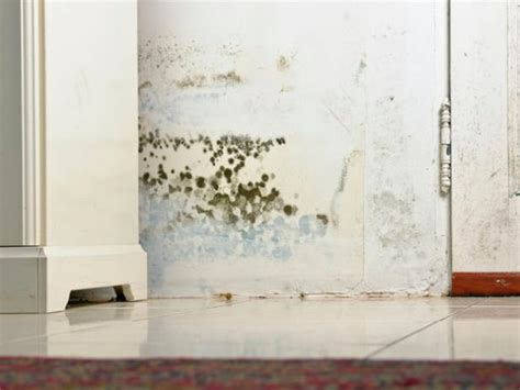 Common Types of Mold in Homes | HGTV