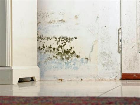 common types  mold  homes hgtv