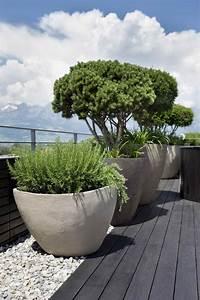 Kübelpflanzen Für Terrasse : k belpflanzen f r terrasse von caf gesucht empfehlungen ~ Lizthompson.info Haus und Dekorationen