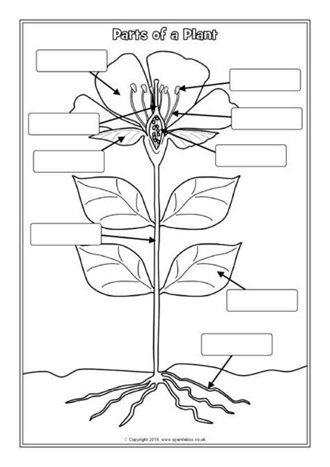 parts   plant labelling worksheets sb sparklebox