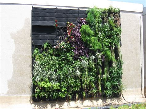 Pflanzen An Wand by Living Wall A M S Green Roof Project