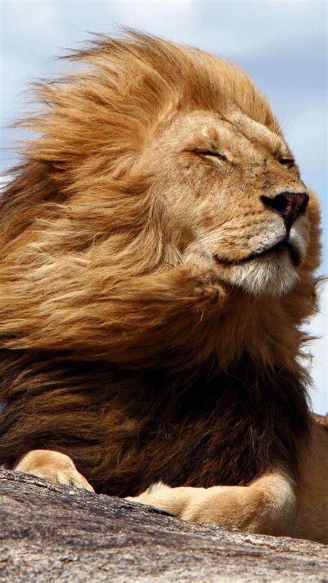 king   serengeti tanzania windows  spotlight images