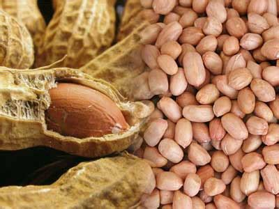 Kacang Koro Kulit 4 Kg resep masakan sederhana dengan bahan seadanya