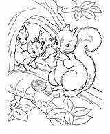 Coloring Squirrel Preschool Colouring Popular sketch template