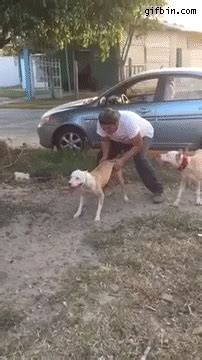 dog jumps  meters  feet  funny gifs