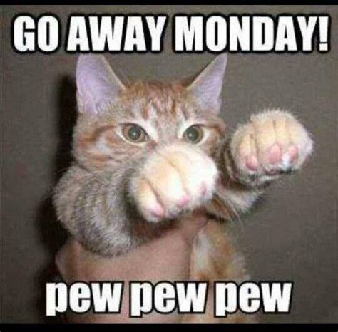Monday Cat Meme - 69 best today is my favorite day images on pinterest mondays buen dia and good morning