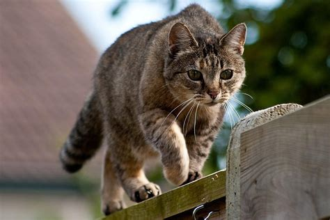 Keep Cats In Backyard by More Tips To Keep Cats Out Of Your Yard