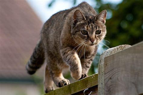tips   cats    yard