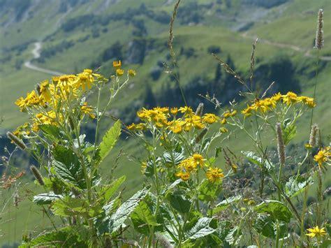 les plantes sauvages toxiques pour le cheval soigner son