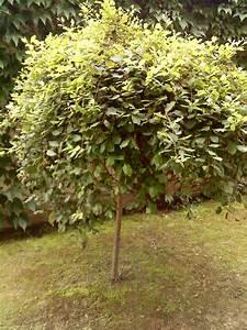 Was Ist Das Für Ein Baum : was ist das f r ein baum insekt allmystery ~ Buech-reservation.com Haus und Dekorationen