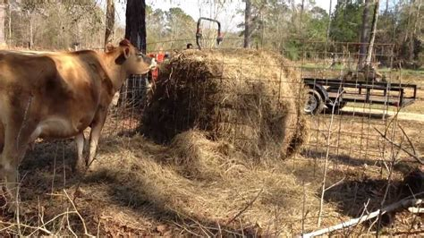 protect   bale  hay  livestock fence