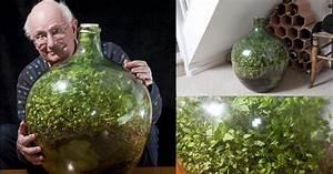 Pflanze In Flasche : in dieser flasche existiert ein eigenes kosystem seit 1960 studiblog ~ Whattoseeinmadrid.com Haus und Dekorationen