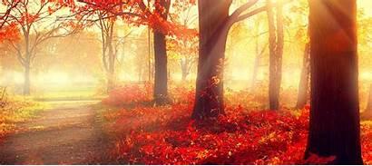 Fall Season Tree Autumn Leicestershire Surgeons Scene