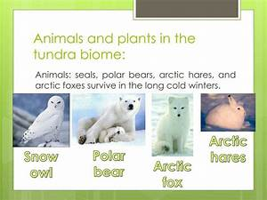 Ppt Biomes Powerpoint Presentation Id2335970