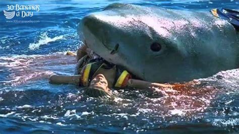 fishing 15 ikan great white sharks weneedfun