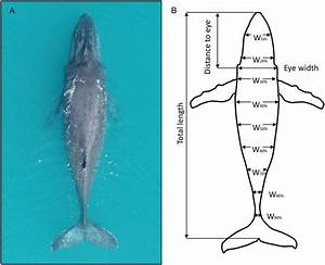 A  An Example Of Desired Aerial Photograph Of Humpback