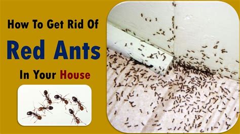 Get Rid Of Ants In Kitchen Naturally