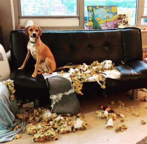 artistic dog messterpieces misinterpreted  humans