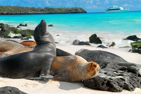 Islas Galapagos Ecuador On Pinterest Ecuador Islands