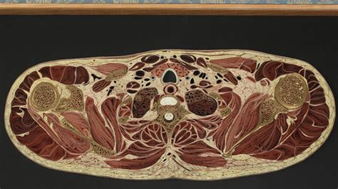 Compact bone is the outer layer and the spongy bone forms the inner layer. These Intricate Anatomy Cross Sections Are Made From Old Books   Mental Floss