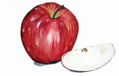 Apple Apples Harvest Month Massachusetts
