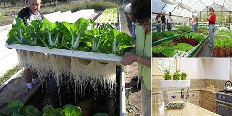 How To Make An Aquaponics System