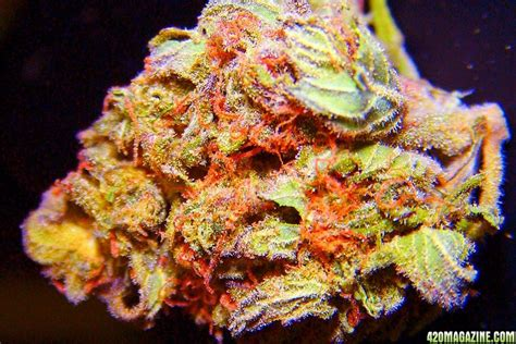 rainbow weed real  fake grasscity forums