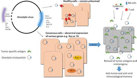 Oncolytic Virus Tumor