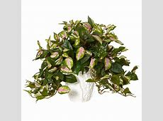 Nearly Natural Indoor Hoya Artificial Plant in White