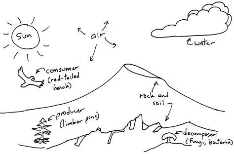 ecosystem diagrams