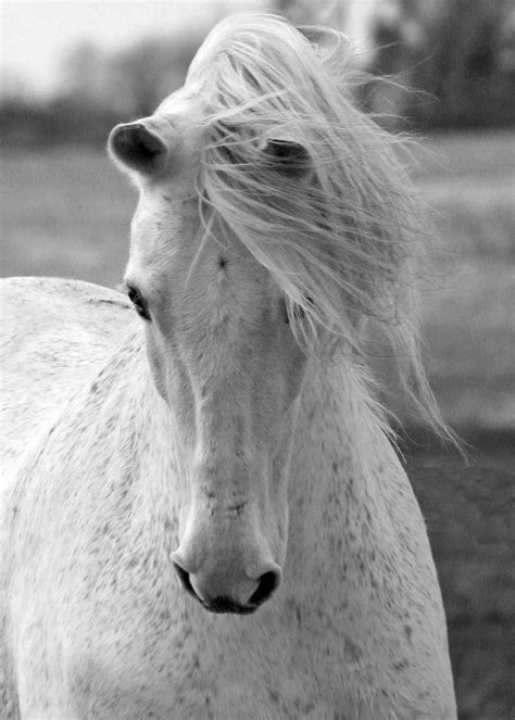 horse horses womens she equestrian lamb samantha strengthened photograph animals began