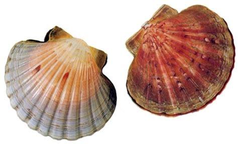 fish type shellfish