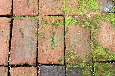 moos entfernen terrasse moos entfernen terrasse und balkon moosfrei machen unkraut garten