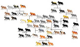warrior cats family tree the gallery for gt warrior cats firestars family tree