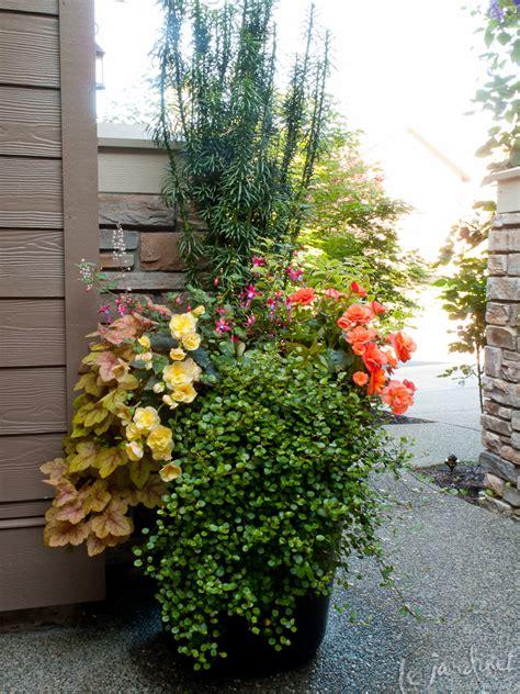 Columnar Japanese Plum Yew (cephalotaxus Harringtonia