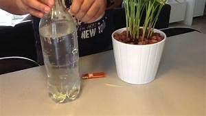 Goutte A Goutte Bouteille : comment arroser vos plantes pendant les vacances goutte goutte youtube ~ Dode.kayakingforconservation.com Idées de Décoration