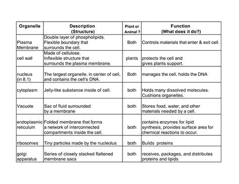 cellular organelle structure  function essay sample