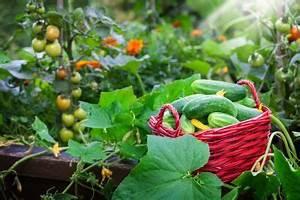 Wann Balkon Bepflanzen : hochbeet bepflanzen mit gem se wann wird was angebaut ~ Frokenaadalensverden.com Haus und Dekorationen