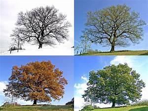 Bäume Umpflanzen Jahreszeit : alle 4 jahreszeiten foto bild jahreszeiten b ume baum bilder auf fotocommunity ~ Orissabook.com Haus und Dekorationen