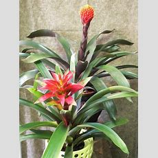 Just In…tropical Plants  Floral Studio