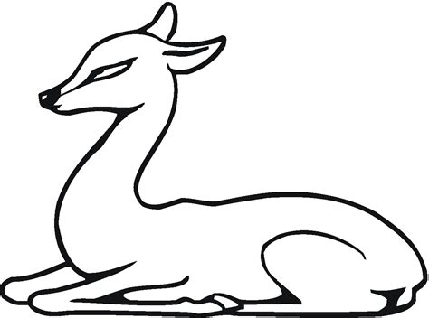 deer coloring pages  adult coloring pages