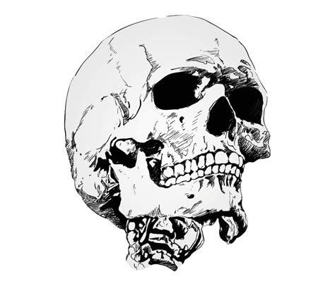 skull drawing png  skull drawingpng transparent