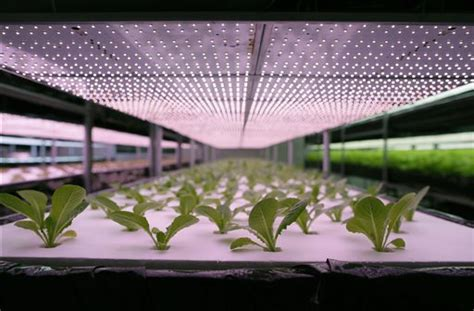 growing vegetables indoors with led lights taiwan expanding into indoor led lit pesticide free farms